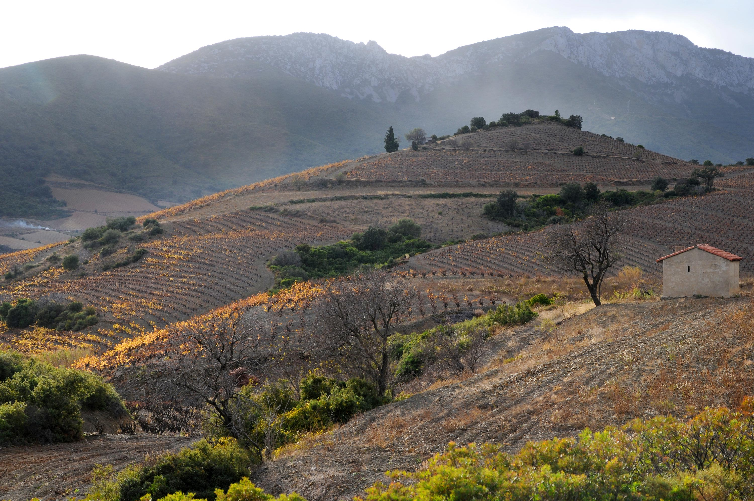 Roussillon-Herbstweinberge_web